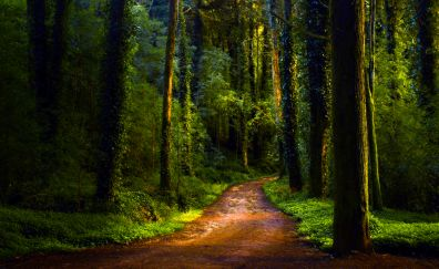 Road of forest, dirt road