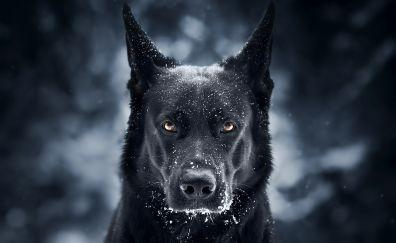 Black dog, German shepherd, muzzle