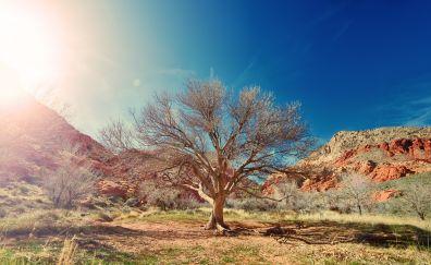 Dry tree, desert, sunlight, nature, 5k