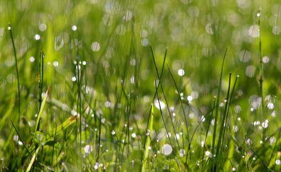 Grass, bokeh, blur, grass threads