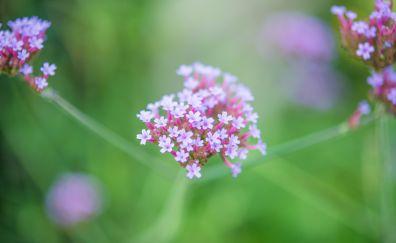 Beautiful flora, small flowers, pink, 4k