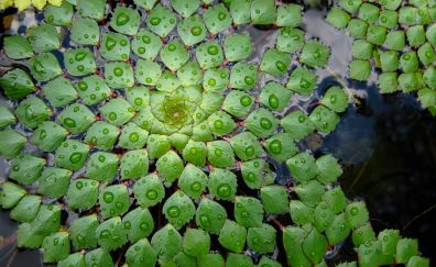 Leaves, water, water drops, pattern, arrangement