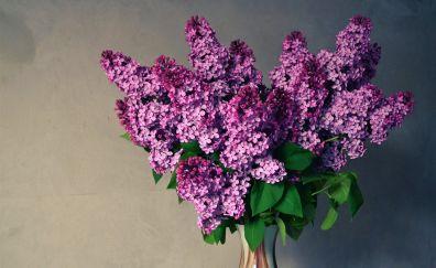 Purple flower, lilac, vase, leaves