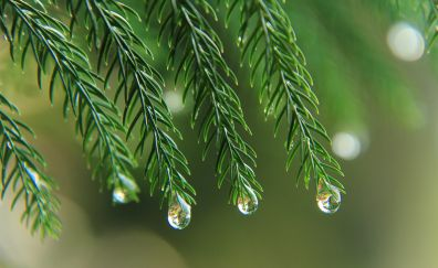 Tree branches, leaves, water drops, 5k