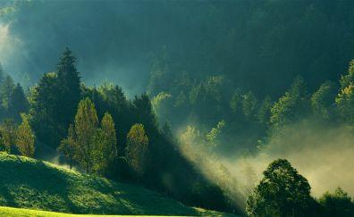 Foggy day, tree, landscape, nature