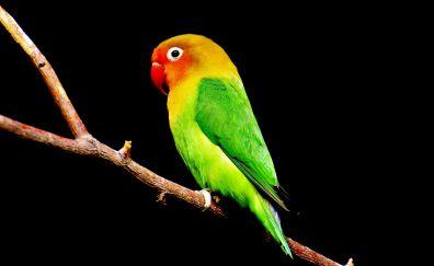 Colorful, bird, parrot, beautiful