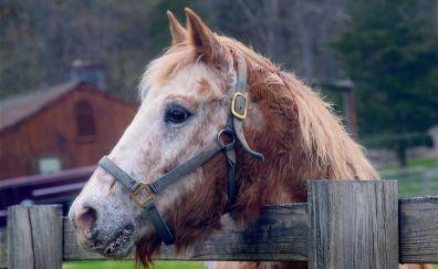 Horse, wooden fence, muzzle