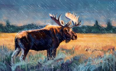 Moose animal artwork