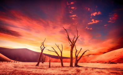 Dried trees, desert, sunset, landscape