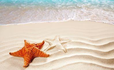 Beach, Sea, Starfish, sand, sea waves