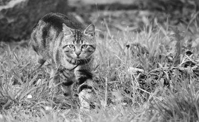 Cat, curious, pet animal, monochrome