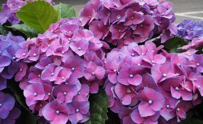Light purple flowers, garden, 5k