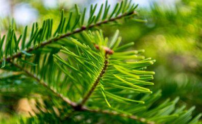 Green leaves, branch, foliage, blur, bokeh