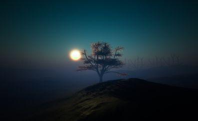 Tree sunset night lights hill