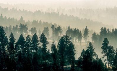 Fog, morning, trees, forest