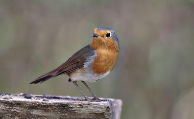 Cute bird, songbird, portrait