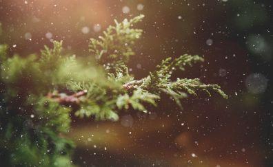 Bokeh, snowfall, tree branch, winter, 5k