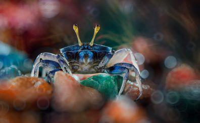 Crab, water animal, bokeh, colorful