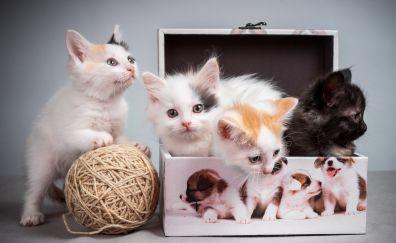 Cute kittens, box, woollen ball