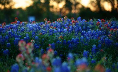 Meadow, plants, blue & purple flowers