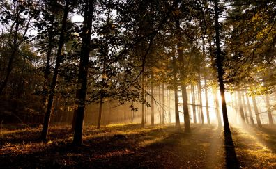 Oak trees, sunlight, 4k, nature