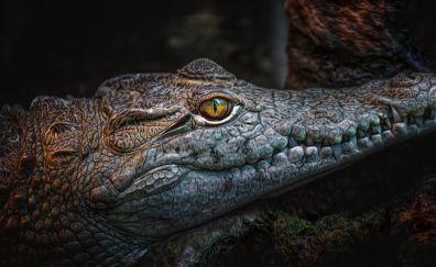 Crocodile, Dangerous reptile, muzzle, predator
