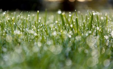 Meadow, dew, morning, green grass