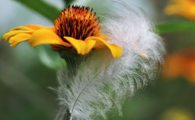 Yellow flower, and feather, close up, 4k