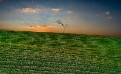 Moc Suong Tea Hill, landscape, sunset, nature