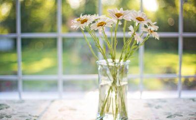 Daisy flowers, vase, window, bokeh