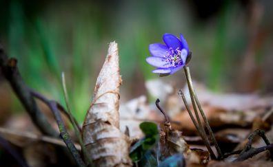 Purple, wild flowers, dry leaves
