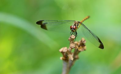 Dragonfly, insects, closeup