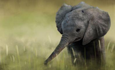 Baby elephant, animal, art