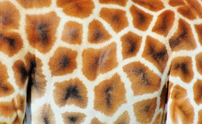 Giraffe skin, pattern