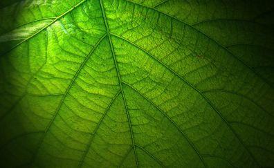 Green Large Leaf, close up