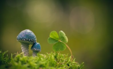 Mushroom and small plant