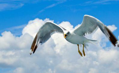 Water bird, gull, white bird, sky