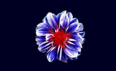 Blue flower, digital art, 4k