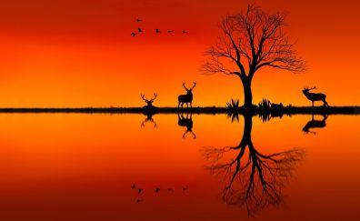 Elk, horizon, sunset, nature, tree, lake, reflections