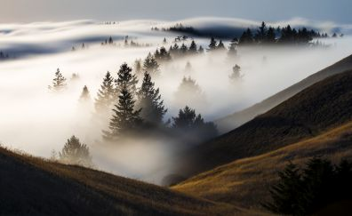 Mist, fog, landscape, trees, nature