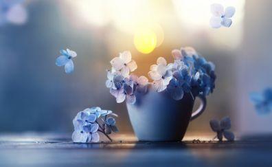 Small, blue flowers, pot