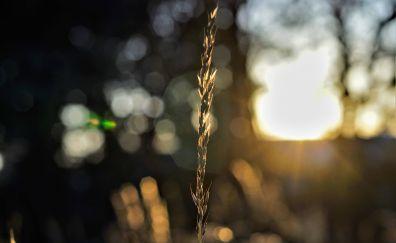 Grass threads, bokeh, sunset