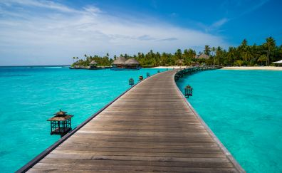 Pier, dock, tropical island, tree, palm tree, nature