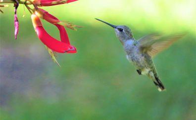 Bird, flowers, hummingbird, fly, wings
