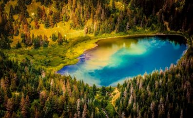 Aerial view, forest, tree, lake, nature