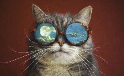 Funny, sunglasses, cat's muzzle, 4k