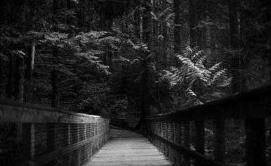 Bridge monochrome