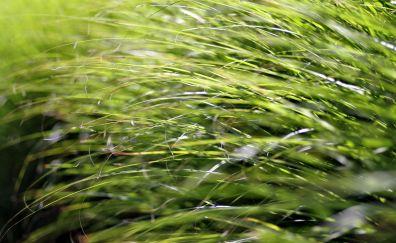 Grass, grass threads, close up