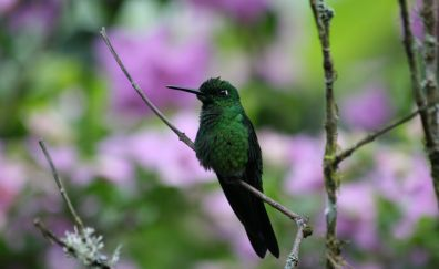 Black green, small bird