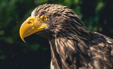 Yellow beak of eagle, bird, predator, close up, 4k